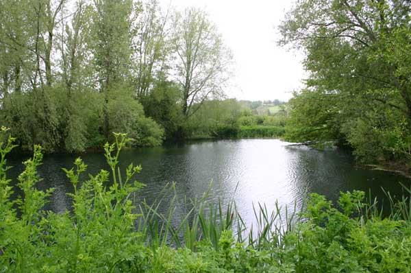 Trout Lakes at Tolpuddle